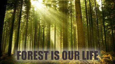 Forest Is Our Life